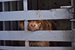Собака в клетке