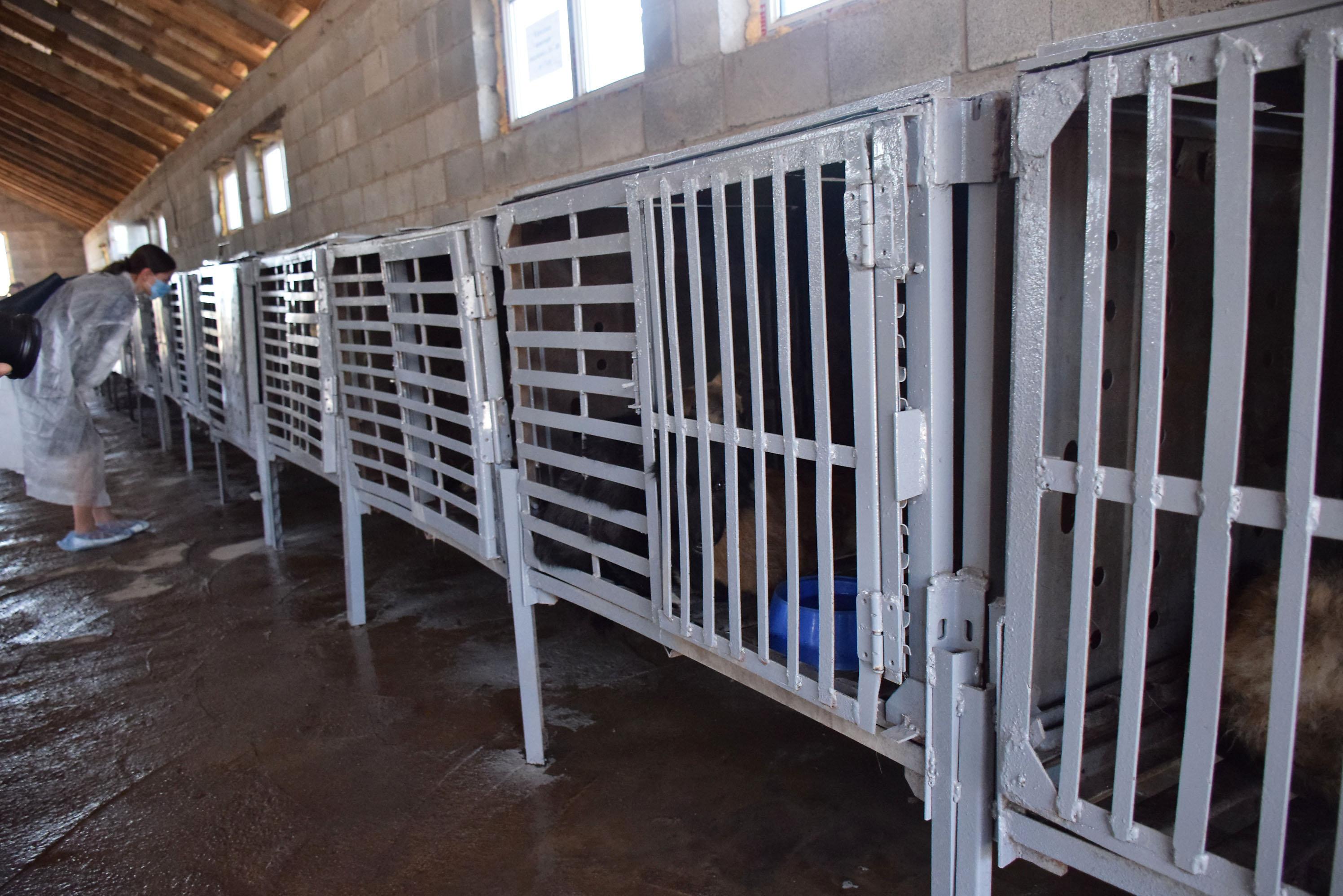 Клетки для бродячих кошек и собак