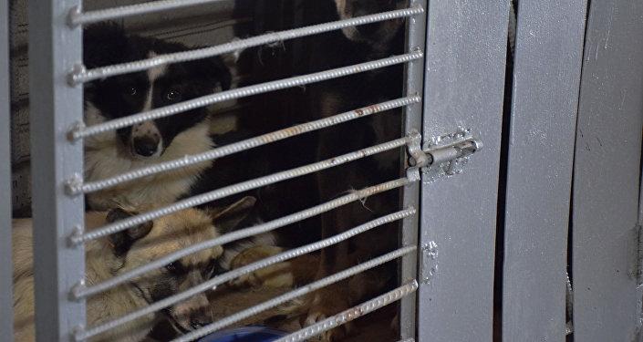 Собаки в клетке