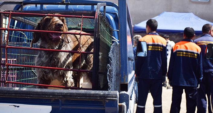 Собака в изоляторе для бродячих животных