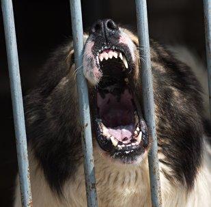 Клыки собаки