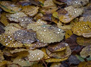 Архивное фото осеннего дождя
