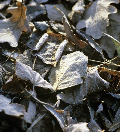 Архивное фото осенней листвы