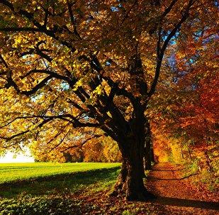 Архивное фото осенних деревьев