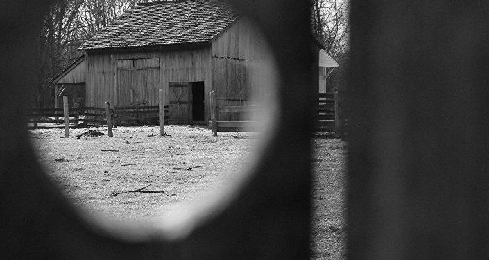 Вид на хозпостройки через щель в деревянной двери