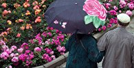 Цветы под летним дождем, архивное фото