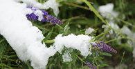 Трава под снегом, архивное фото