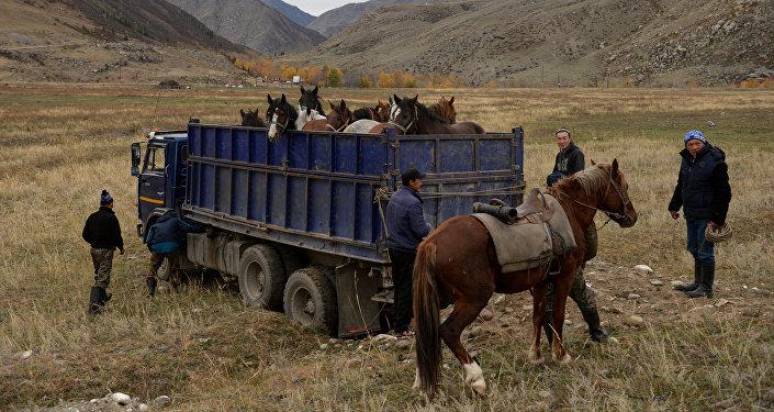 Транспортировка лошадей, архивное фото