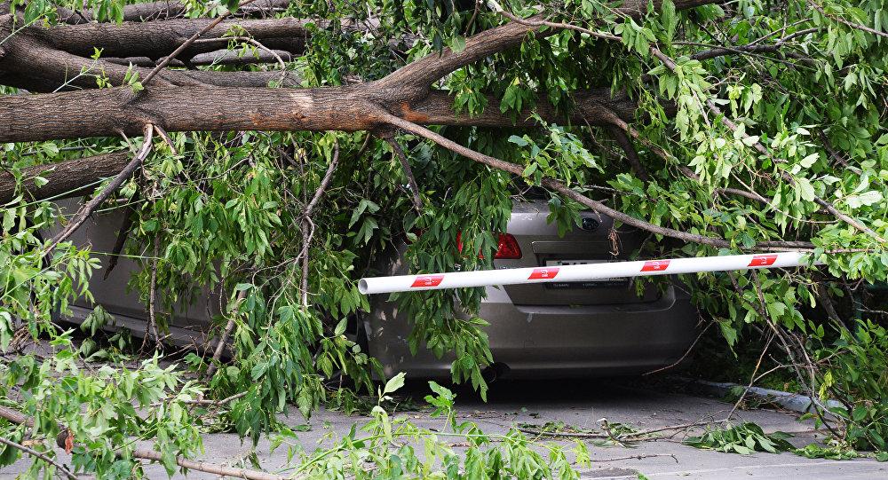 Сломанное ураганом дерево, архивное фото