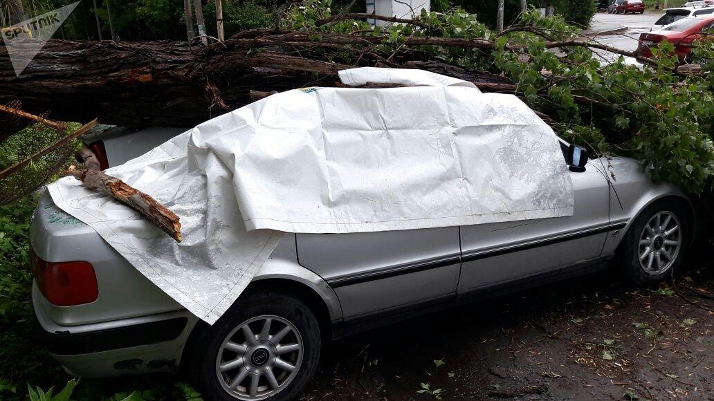 Дерево упало на два авто в алматинском микрорайоне