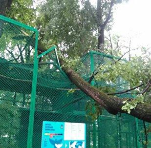 Дерево упало на вольер с птицами в зоопарке Алматы