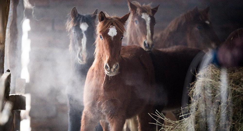 Лошади на конюшне, архивное фото