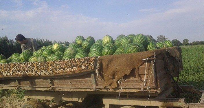 Ранние арбузы из Южного Казахстана
