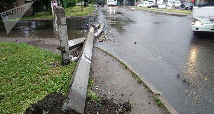 Дерево повредило высоковольтные линии в Алматы