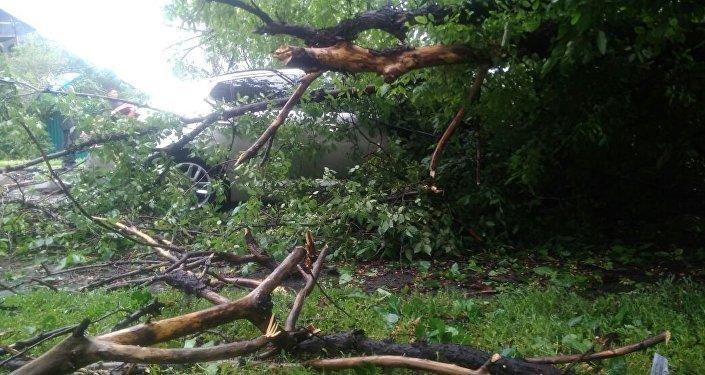 Дерево упало на автомобиль в Алматы