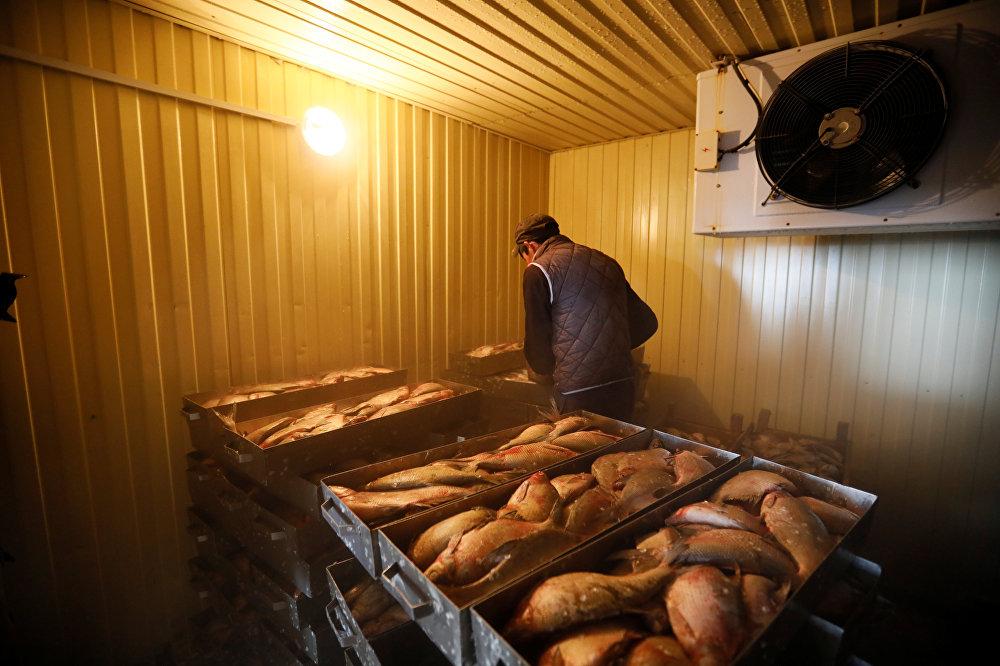 Местный житель работает на рыбном сортировочном заводе близ Аральского моря, архивное фото