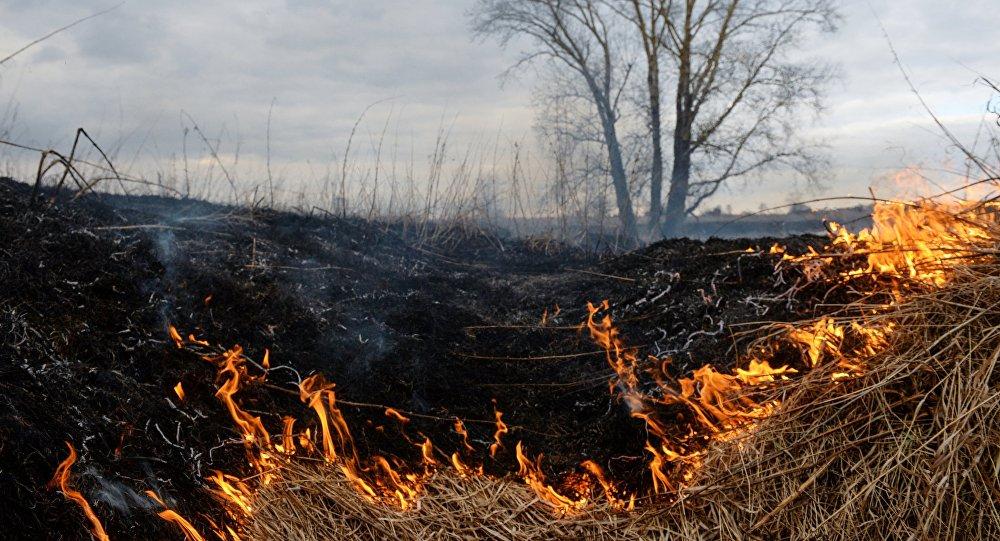 Архивное фото горения сухой травы