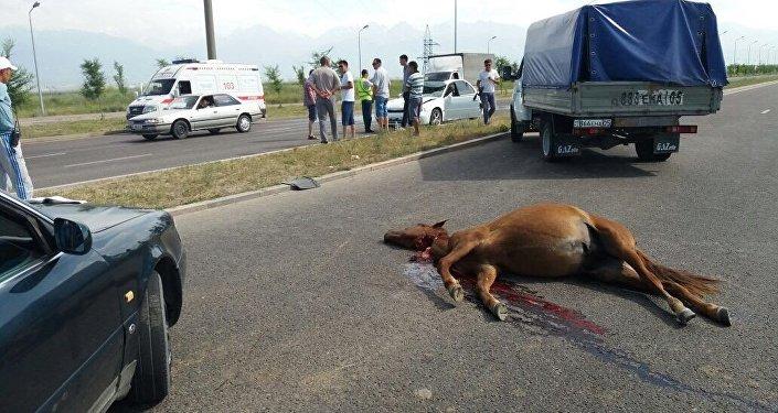 Жеребенок погиб в ДТП в Алматы