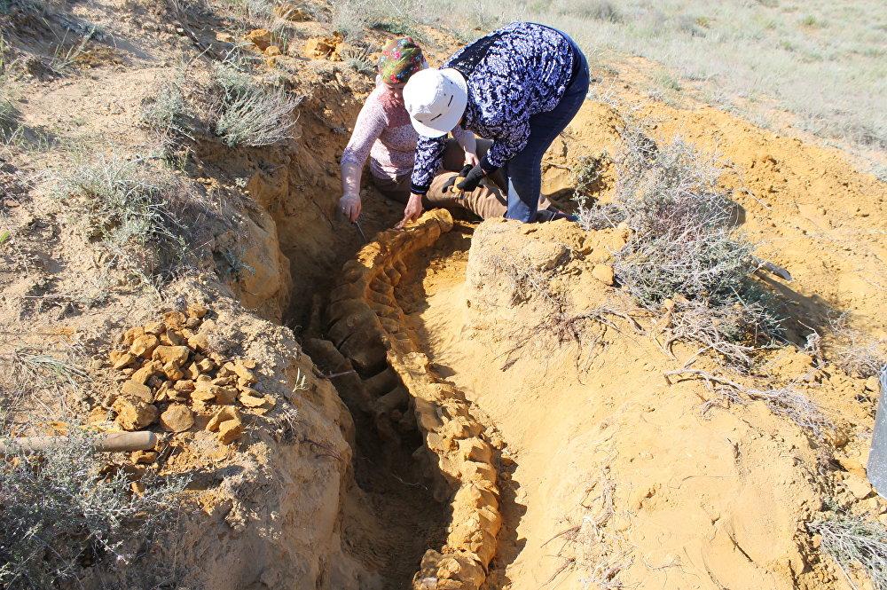 Сенсационные останки древней водной рептилии обнаружены под Мангистау