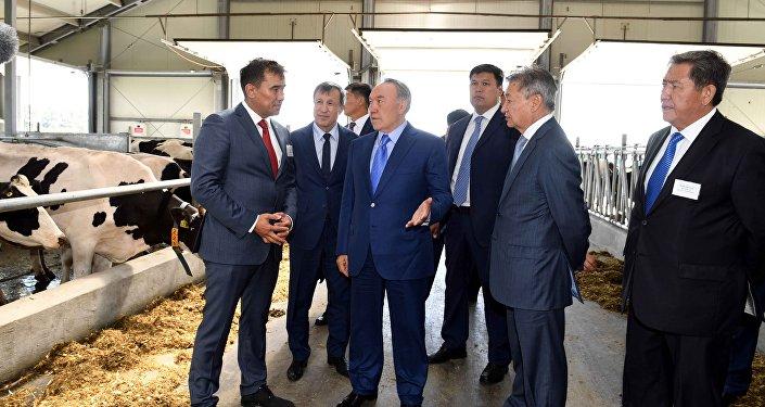 Нурсултан Назарбаев посетил молочно-товарную ферму в ВКО