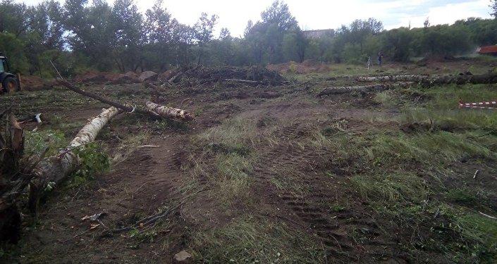 Вырубка деревьев в Центральном парке Караганды