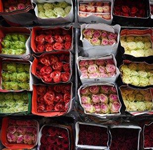 Архивное фото цветов