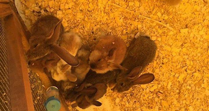 Контактный зоопарк пытались закрыть зоозащитники в Петропавловске