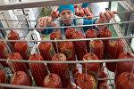 Работа птицефабрики Рефтинская в Екатеринбурге