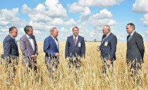 Нурсултан Назарбаев посещает пшеничные поля в Акмолинской области