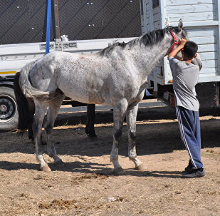 Конь по имени Экспо