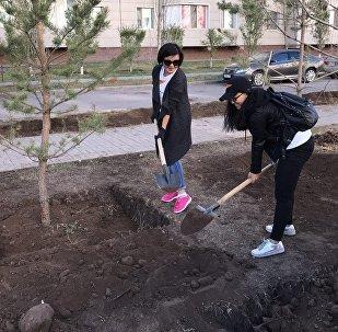 Астанадағы сенбілік кезінде Sputnik Казахстан қызметкерлері ағаш отырғызды