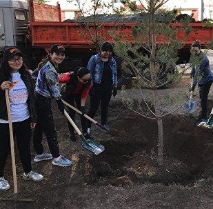 Сотрудники Sputnik Казахстан посадили деревья на субботнике в Астане