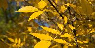 Осень в Астане