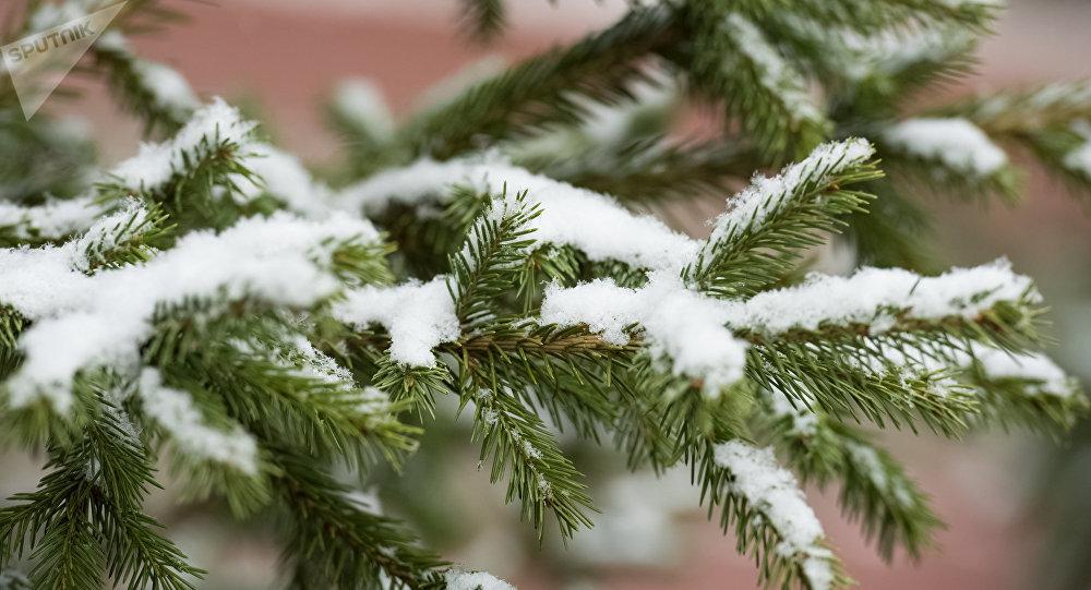 Зима вКазахстане предполагается ранней иснежной— синоптики