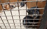 Щенок в вольере пункта кратковременного содержания бездомных животных, архивное фото