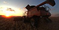 Уборка урожая, архивное фото