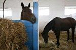Лошади в конюшне, архивное фото