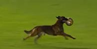 Служебная собака выбежала на футбольное поле во время матча в Боливии