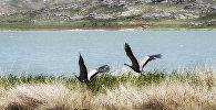 Айыртау - Монастырское озеро в ВКО