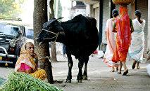 Индия, архивное фото