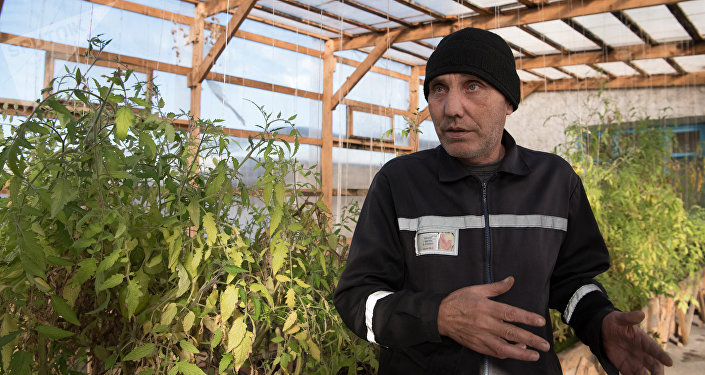 В теплице выращивают помидоры, огурцы и клубнику