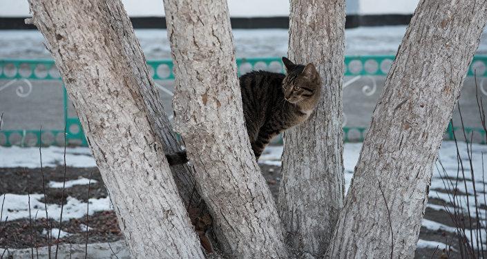 Кот на дереве, архивное фото