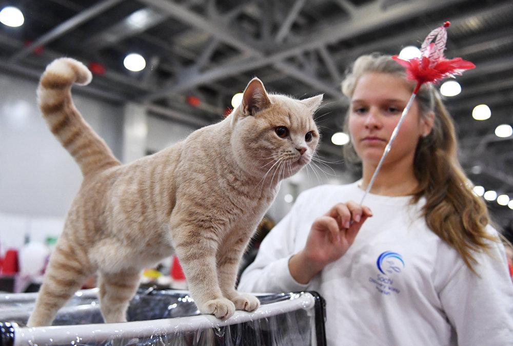 Международная выставка кошек в Москве