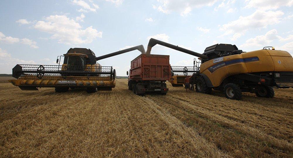 Почти 23 млн тонн зерна собрали в Казахстане в текущем году