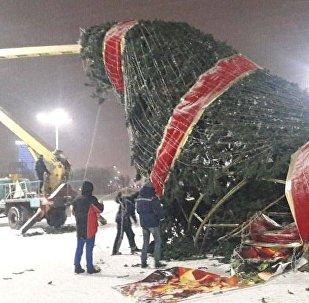 Ақтөбеде Жаңа жылдық шырша құлап қалды