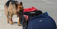 Служебная собака рядом с сумками, архивное фото