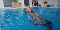 Дельфин, архивное фото