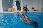 Дельфин, архивтегі фото