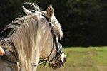 Лошадь, архивное фото