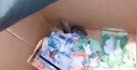 Мыши в банкомате